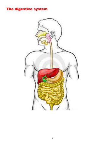 The Digestive system - Suitable for GCSE, A Level, BTEC and related courses