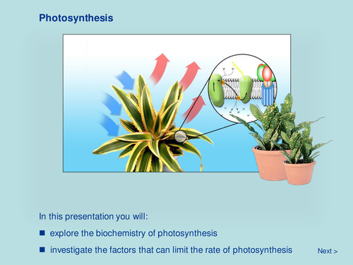 Plant Biology - Photosynthesis