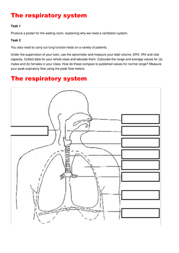 The respiratory system: PPT and Booklet: Breathing, gas exchange, Fick's  Law  2 RESOURCES