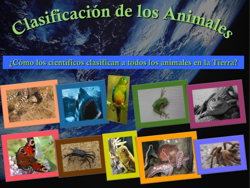 Clasificación de los Animales - PowerPoint