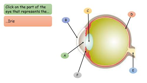 Science plenary - They eye