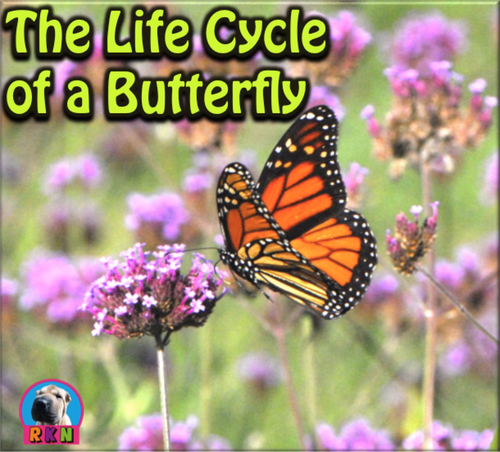 The Life Cycle of a Butterfly - PowerPoint