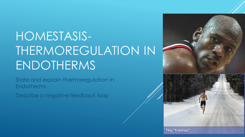 Homeostasis- Thermoregulation in endotherms