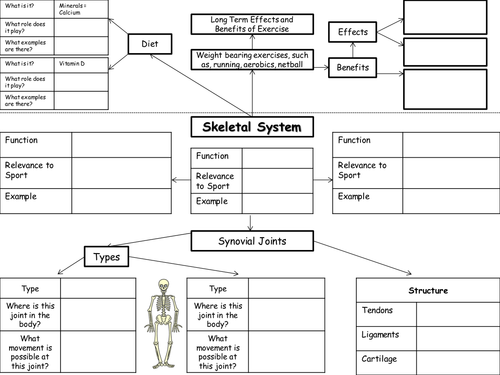 Edexcel GCSE PE Body Systems Worksheets by Mitchbradley005 – The Skeletal System Worksheet Answers