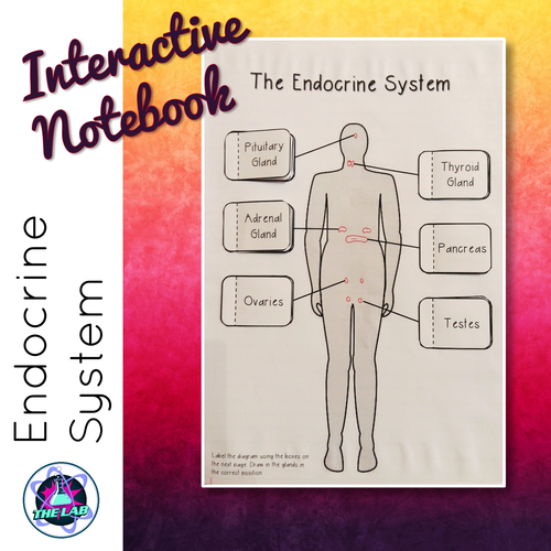 Endocrine system by liezelpienaar teaching resources tes ccuart Gallery