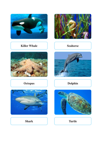 Animal activity - place the name with the animal, animal on the correct habitat, write a story.
