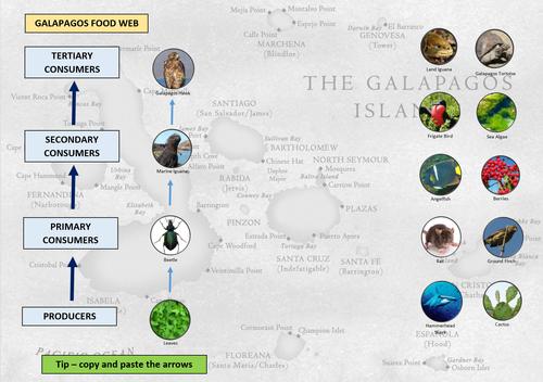 Galapagos Islands Food Web Ecosystem ICT Lesson KS2 KS3 KS4