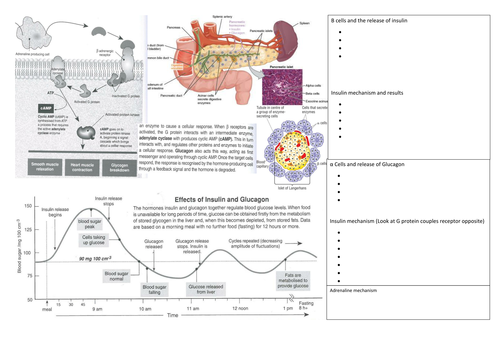 Regulation of Blood glucose and secondary messenger system