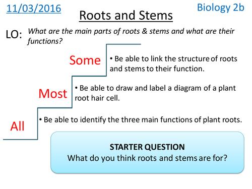 Plant Roots & Stems - NEW KS3