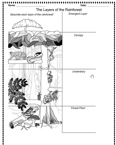 Layers of the Rainforest Lesson plan notebook and activity – Layers of the Rainforest Worksheet