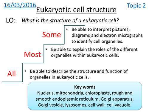 Eukaryotic cell structure - NEW A LEVEL