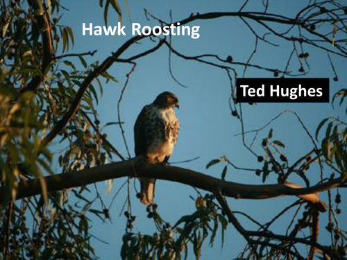 ted hughes hawk roosting essay New topic snowdrop ted hughes new topic football at slack ted hughes new topic thistles by ted hughes ted hughes new topic langston hughes salvation thesis new topic langston hughes poems i too new topic freedom train by langston hughes hawk new topic mother to son langston hughes summary new topic a dream deferred langston hughes.