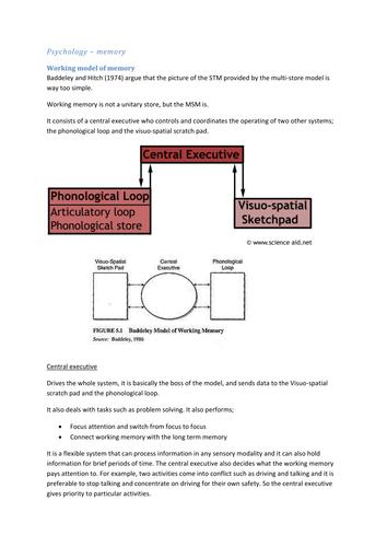 Multi store model essay plan