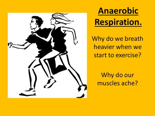 Anaerobic Respiration Presentation