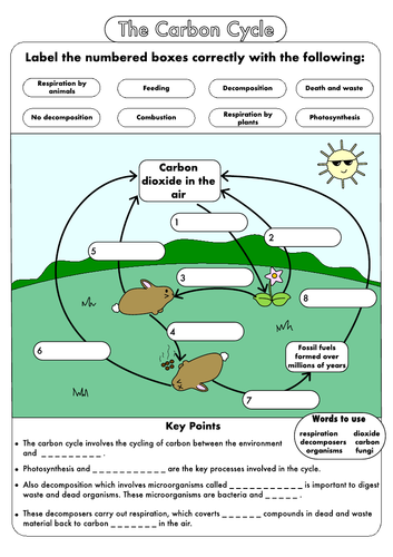 Carbon Cycle Diagram Gcse Carbon Dioxide Cycle Diagram World Of