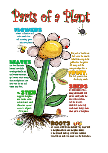 Living things and their habitats - The Art of Living - Year 5 by ...