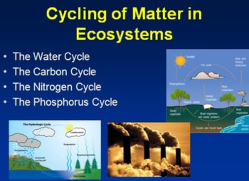 The Water Cycle The Carbon Cycle The Nitrogen Cycle and The – The Carbon Cycle Worksheet