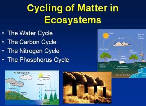 The Water Cycle The Carbon Cycle The Nitrogen Cycle and The – Carbon Cycle Diagram Worksheet