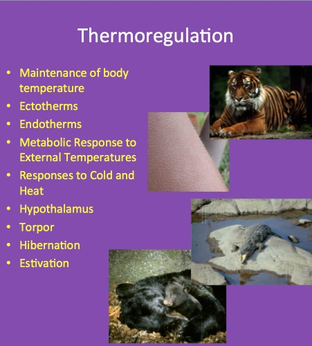 thermoregulation in ectotherms and endotherms Thermoregulation in ectotherms benny cheong 3i305 ectotherms ectotherms are animals which regulate their body temperature via external means these animals are reliant on the environment for the gain or loss of heat.