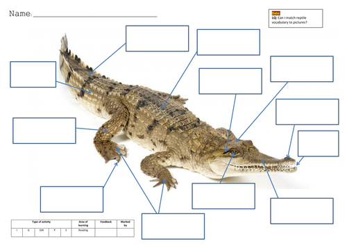 Crocodile - Match vocab to picture