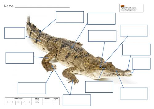 Crocodile Resource Pack By Mandem2014 Teaching Resources
