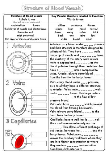 Worksheets Biology Worksheets Pdf fresh lettuce biology resources teaching tes bumper gcse worksheet pack