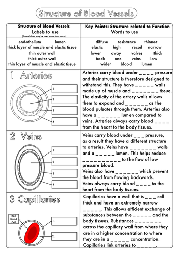 Biology GCSE Revision Circulation Worksheet Pack by beckystoke – Heart Worksheet