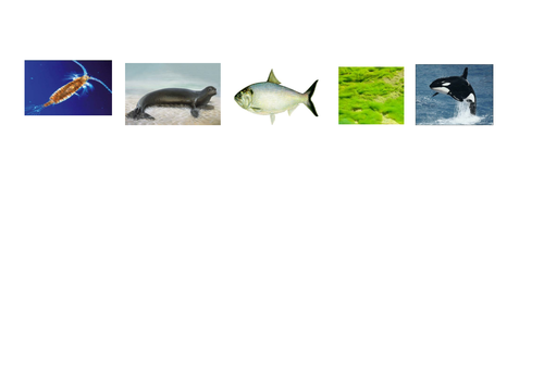Food Chains Full  Lesson with Worksheets,  Plan and Food Web Extension (Year 2/Key Stage 2)