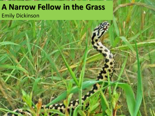 CCEA Literature Poetry- Nature and War - 'A Narrow Fellow in the Grass', by Emily Dickinson.