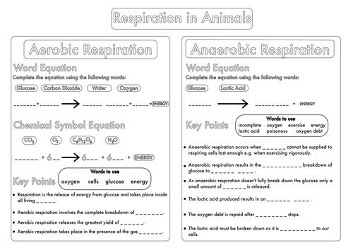 Biology Gcse Revision Circulation Worksheet Pack By