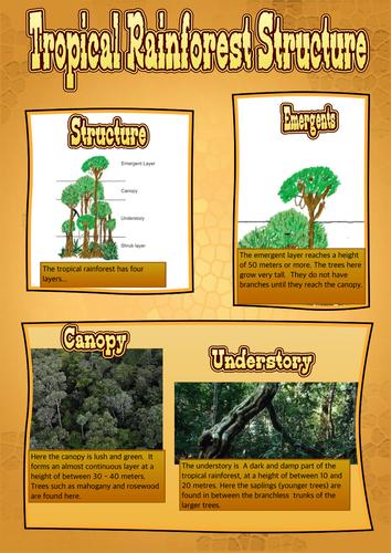 Tropical Rainforest Structure KS3 and KS4