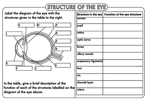 GCSE worksheets on the Nervous System by beckystoke Teaching – Nervous System Worksheets