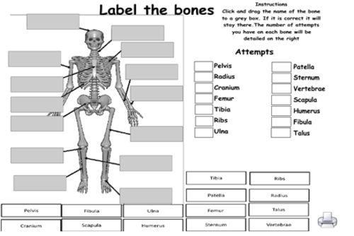 Muscular and skeletal system games (GCSE PE REVISION)