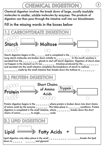 Worksheets Digestion Worksheet gcse digestion topic resource pack by beckystoke teaching digestive system structure and function worksheet pdf