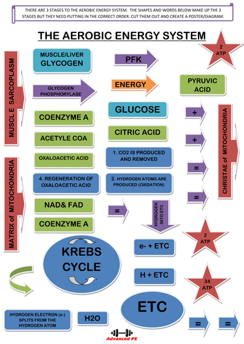 The Aerobic energy system - design a poster/diagram worksheet A Level PE