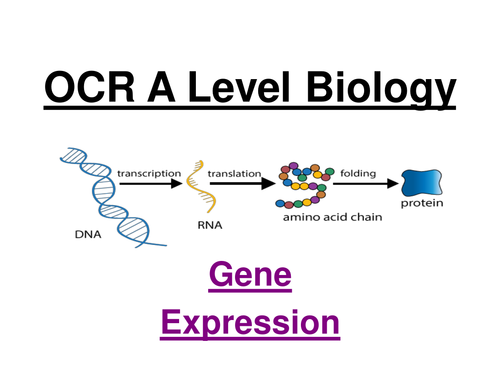 OCR A Level Biology - Gene expression (lac operon)