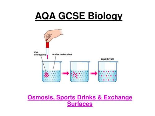gcse biology coursework on osmosis