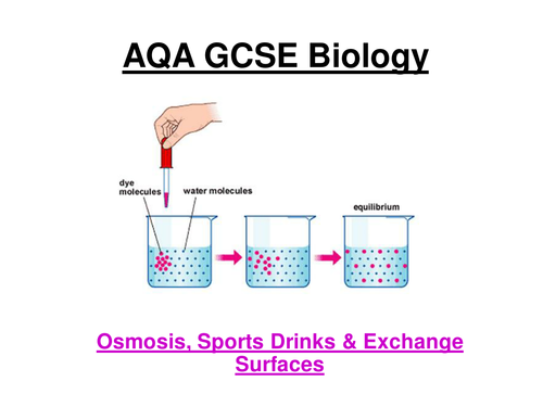 GCSE AQA Biology - Osmosis, sports drinks & exchange surfaces (24 slide powerpoint)