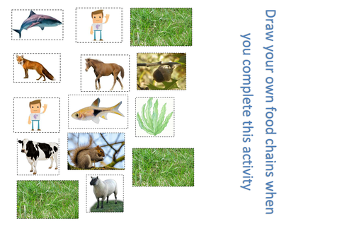 Food Chains Full Lesson with Worksheets Plan and Food Web – Food Web Worksheet