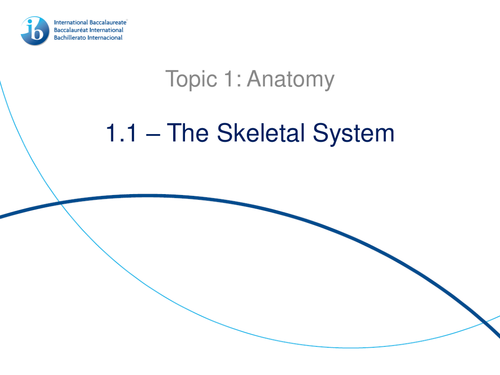 1.1. The Skeletal System IB Sports, Exercise and Health Science (SEHS) PowerPoint