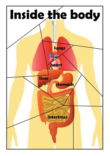 Human Heart Diagram Simple