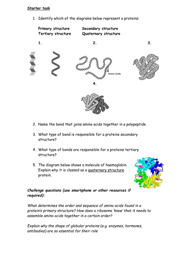 Protein Structure Worksheet By Cmrcarr Teaching Resources