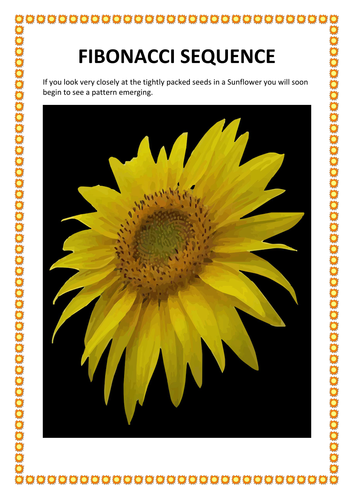 SUNFLOWERS -SCIENCE/ MATHS/ART - UNIT OF WORK