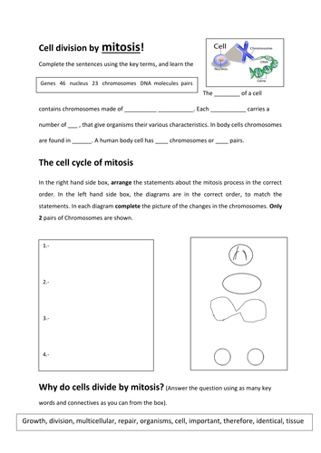 Cell division by mitosis AQA Biology New 8461