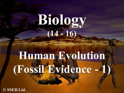 B3.2 Human Evolution - Fossil Evidence 1