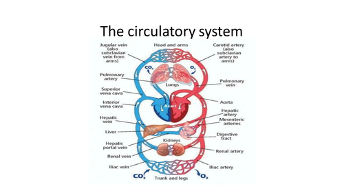 Parts Of The Circulatory System Ks2 Lesson Plan And