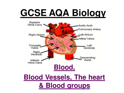 GCSE AQA Biology - Blood, blood vessels, the heart and ...
