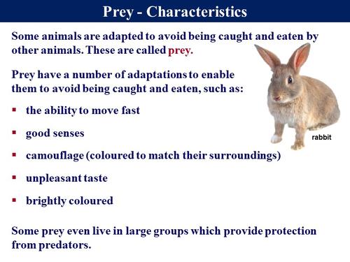 1.4.2 Predator Prey Relationships