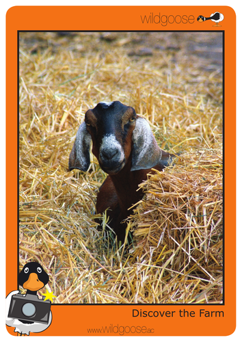 Discover the Farm Photopack and Teachers notes