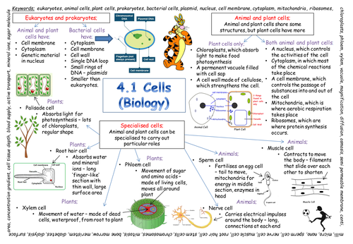 New Aqa Gcse Cells Revision Poster 2018 Exam By Paulamac29